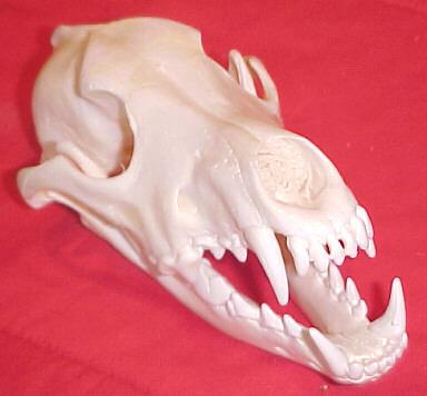 Skulls at Riverside Retreat